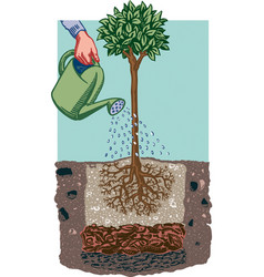 Female hand watering a plant vector