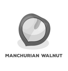 manchurian walnutdifferent kinds of nuts single vector image