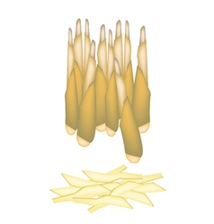 Fresh Bamboo Shoots on A White Background vector image vector image
