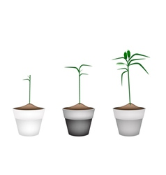 Fresh sesame plant in ceramic flower pots vector