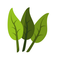 three leaves icon image vector image vector image
