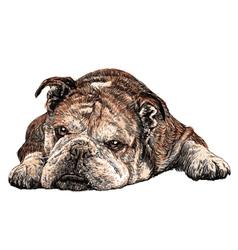 Bulldog 03 vector