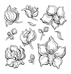 floral set orchids beautiful hand drawn design vector image vector image