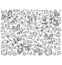 Hand drawn of pod of chick peas background vector