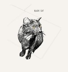 black cat sitting hand drawn sketch line art vector image