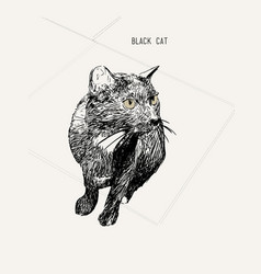 Black cat sitting hand drawn sketch line art vector
