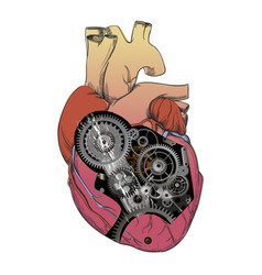 heart with mechanism vector image