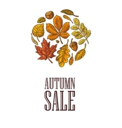 Poster AUTUNB SALE with set leaf and acorn vector image vector image