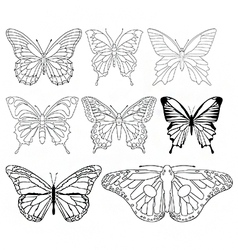 Butterflies and moths vector