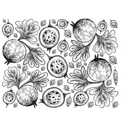 Hand drawn background of indian gooseberry fruits vector