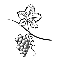 Grapes Imitation engraving vector image