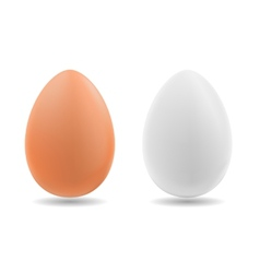 Brown and white eggs on background vector