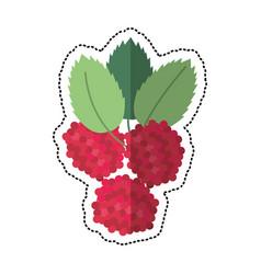 cartoon raspberry natural diet icon vector image