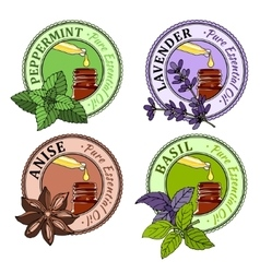 Basil mint lavender anise set of essential oil vector