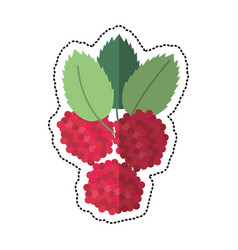 cartoon raspberry natural diet icon vector image vector image