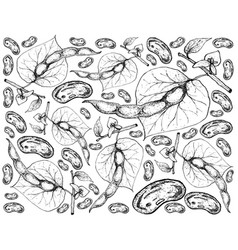 Hand drawn of common bean plants background vector
