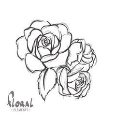 Beautiful roses on a white background vector