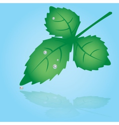 green leaf and dew eps10 vector image vector image