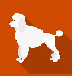 Poodle icon in flat style for web vector
