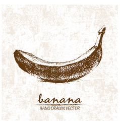 Digital detailed banana hand drawn vector