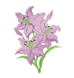 Three purple lilies vector