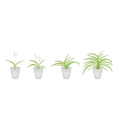 A set of dracaena plant in flower pots vector
