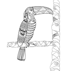 Toucan Coloring book for adults vector image vector image