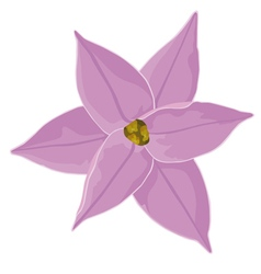 One pink flower bud ipheion vector