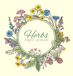 in circle shape herbs vector image