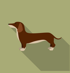 Dachshund icon in flat style for web vector