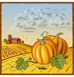 Landscape with pumpkins vector image