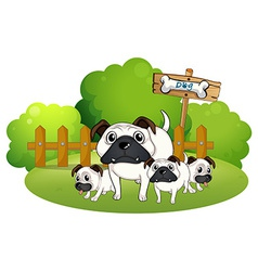 A group of bulldogs near the fence vector image