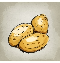 Fresh potatoes vector
