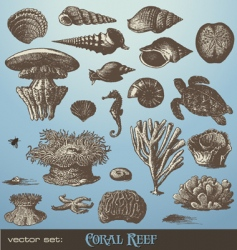 coral reef vector image vector image