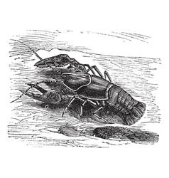 Lobster vintage engraving vector image vector image