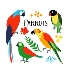 Set of tropical parrots with palm leaf and vector
