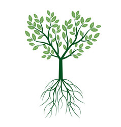 green tree with leafs and roots vector image vector image