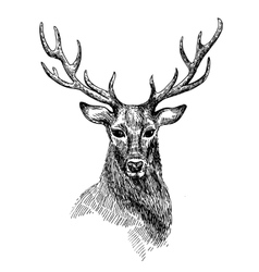 Sketch of deer vector image vector image