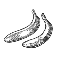 Two single banana black hand drawn vintage vector