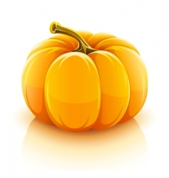 pumpkin vegetable vector image vector image