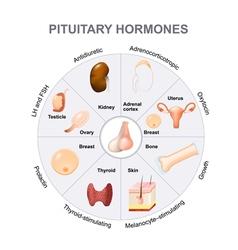 Pituitary hormones vector