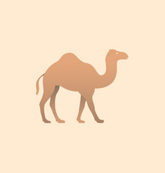 brown camel vector image