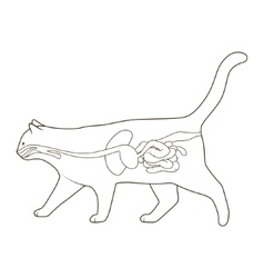 Digestive system of the cat vector