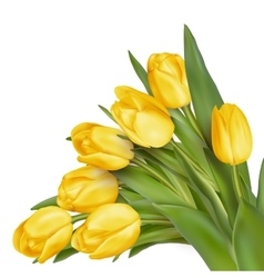 Bouquet of yellow tulips eps 10 vector