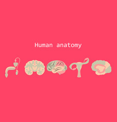 human body internal organs medical flat isolated vector image vector image