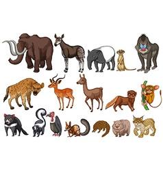 Rare animals vector