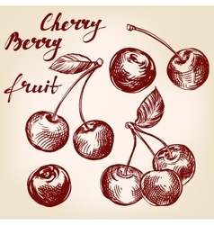 cherry set hand drawn llustration realistic vector image vector image