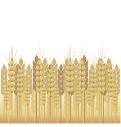 Yellow wheat on a white background vector