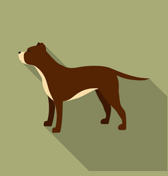 pitbull icon in flat style for web vector image