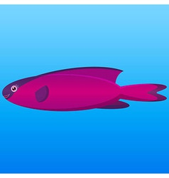 A of a pink and purple hooded wrasse fish on blue vector